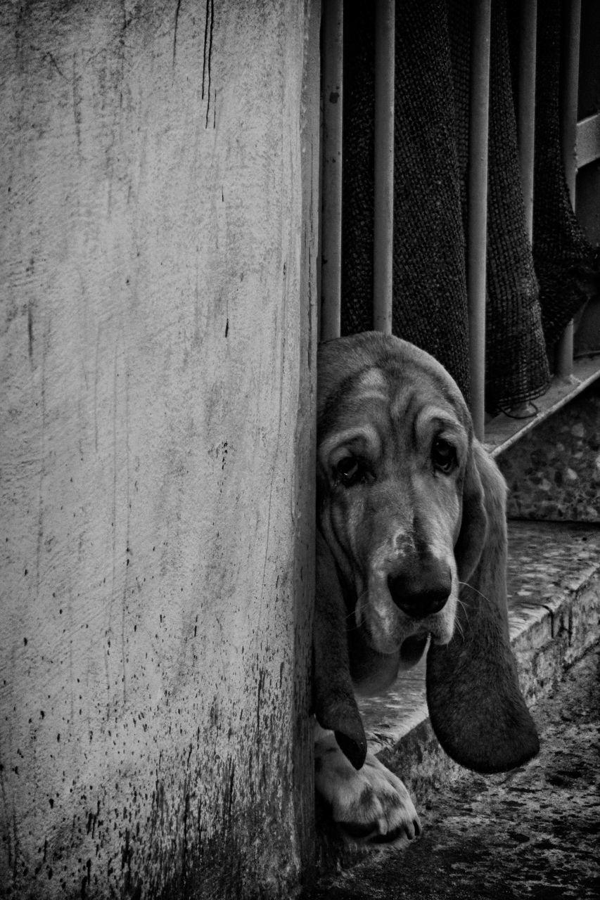 Portrait Of Dog Sitting By Window On Street