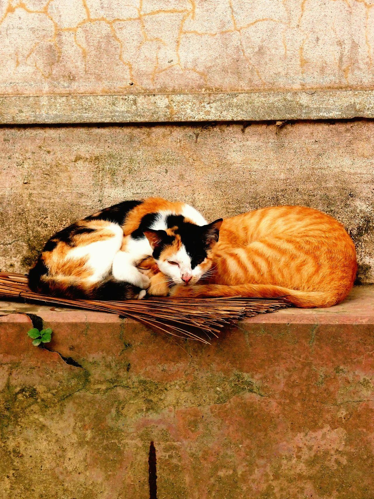 Cats Sleeping Time Cute Cats Vietnam Viet Nam Hoi An Homeless Cats Homeless Or Just Chillin' Just Chillin'