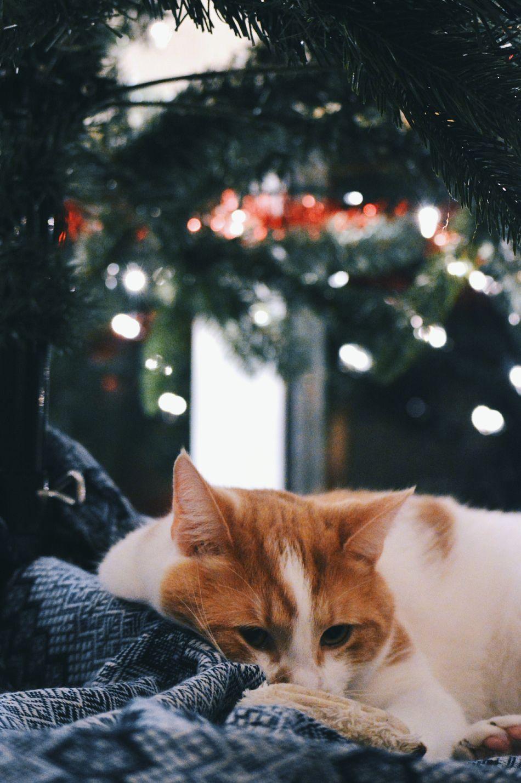 Beautiful stock photos of weihnachtsbaum,  Animal Themes,  Christmas,  Christmas Decoration,  Christmas Ornament