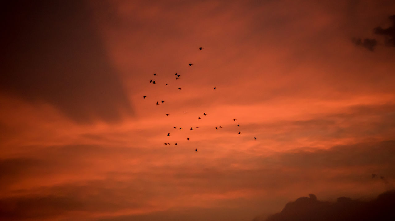 sunset, flying, orange color, bird, animals in the wild, silhouette, flock of birds, sky, animal themes, large group of animals, mid-air, cloud - sky, animal wildlife, beauty in nature, low angle view, nature, migrating, outdoors, togetherness, scenics, no people