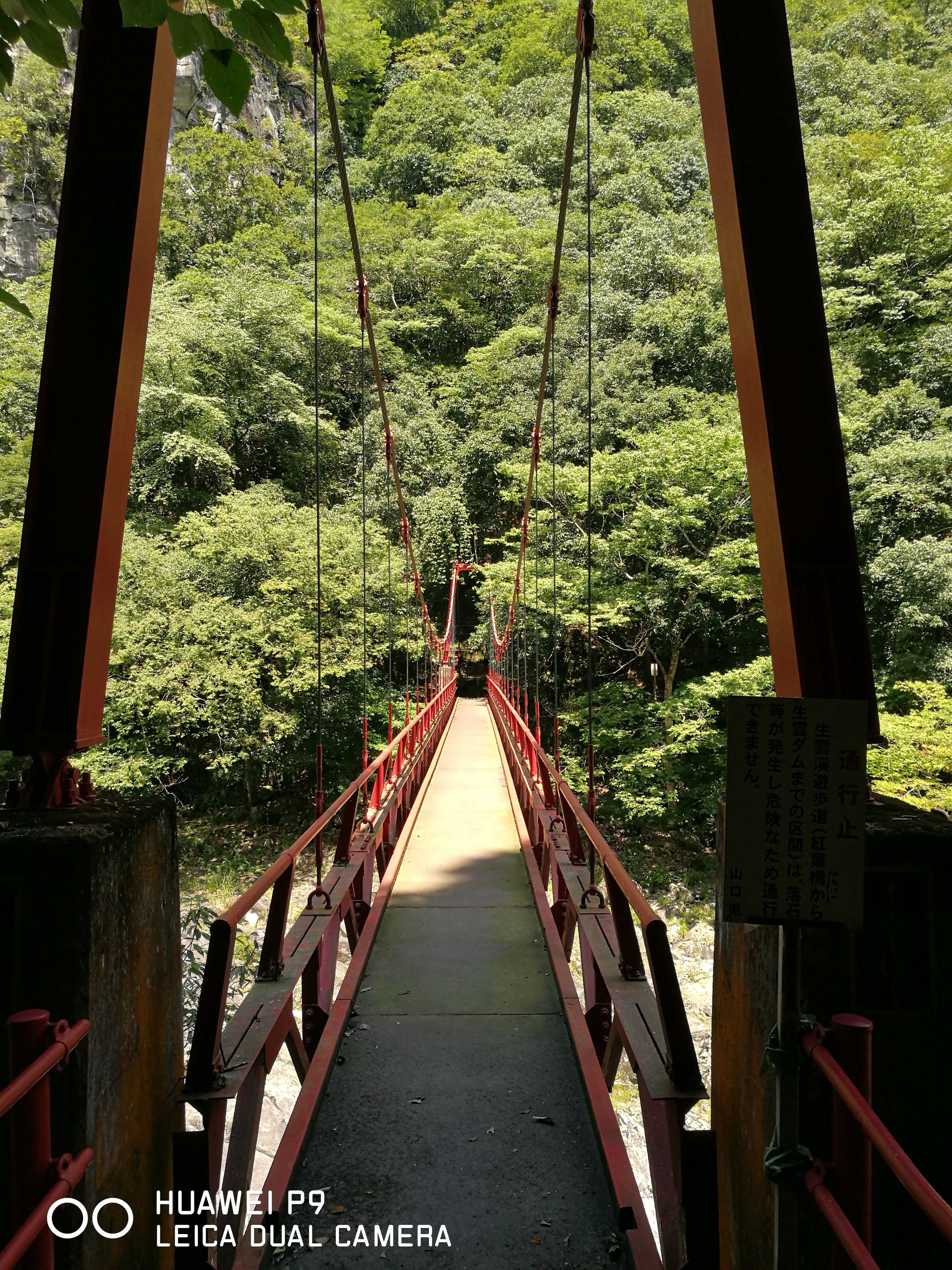 tree, railing, the way forward, architecture, green color, narrow, diminishing perspective, lush foliage, footbridge, growth, day, tranquil scene, bridge, outdoors, green, tranquility, solitude, scenics