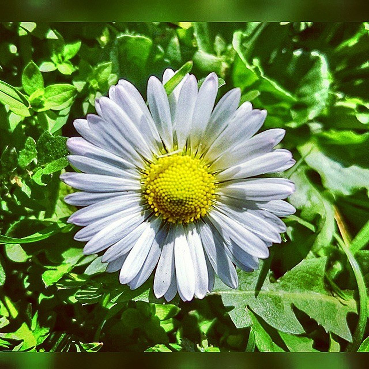 flower, petal, fragility, flower head, growth, nature, beauty in nature, freshness, plant, no people, outdoors, green color, day, pollen, close-up, stamen, blooming, summer, beauty