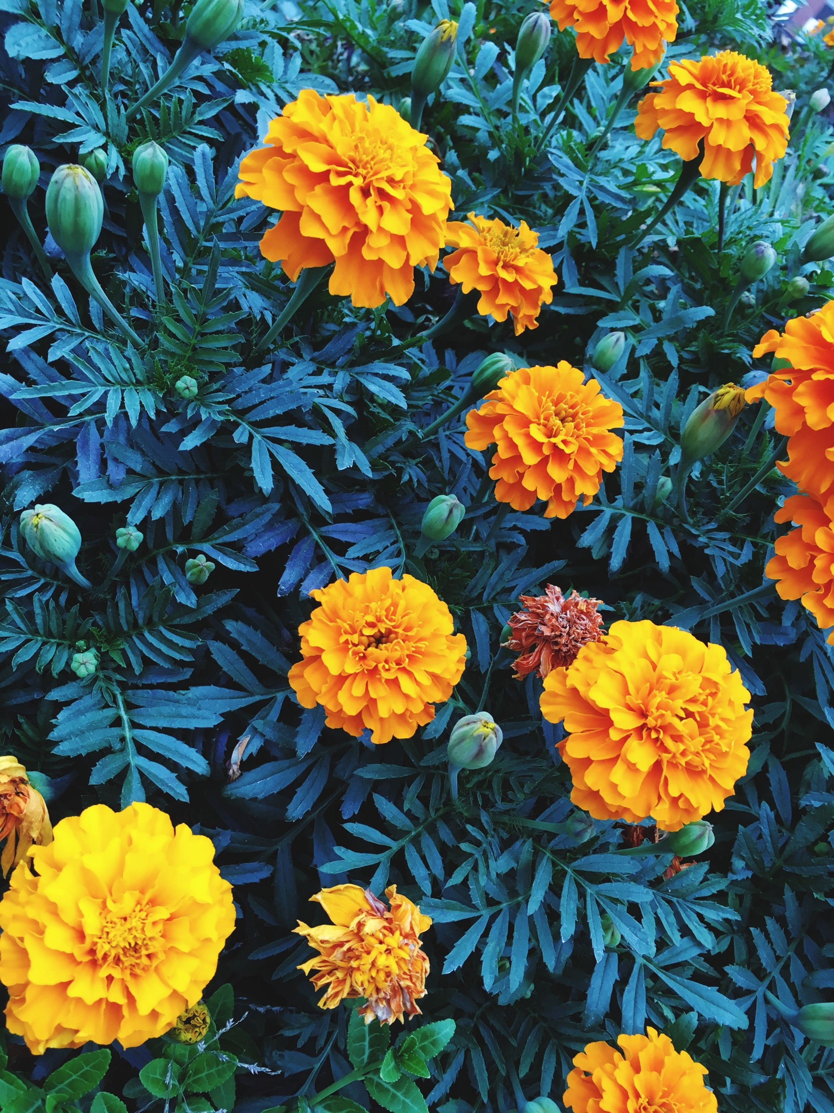flower, freshness, yellow, fragility, petal, beauty in nature, growth, flower head, blooming, nature, plant, high angle view, full frame, abundance, backgrounds, blossom, in bloom, vibrant color, leaf, springtime
