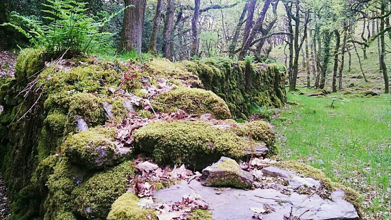 WoodLand Furrytrees Fatherford Okehampton Rambling Walking