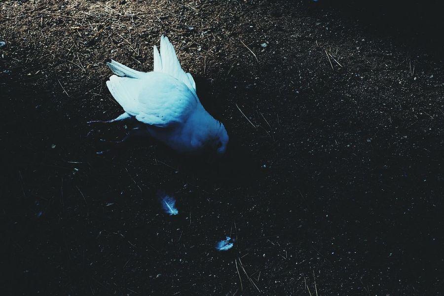 Dead pidgeon Fragility Outdoors Sunlight Shadows & Lights Dead Bird Dead Pidgeon Color Contrast