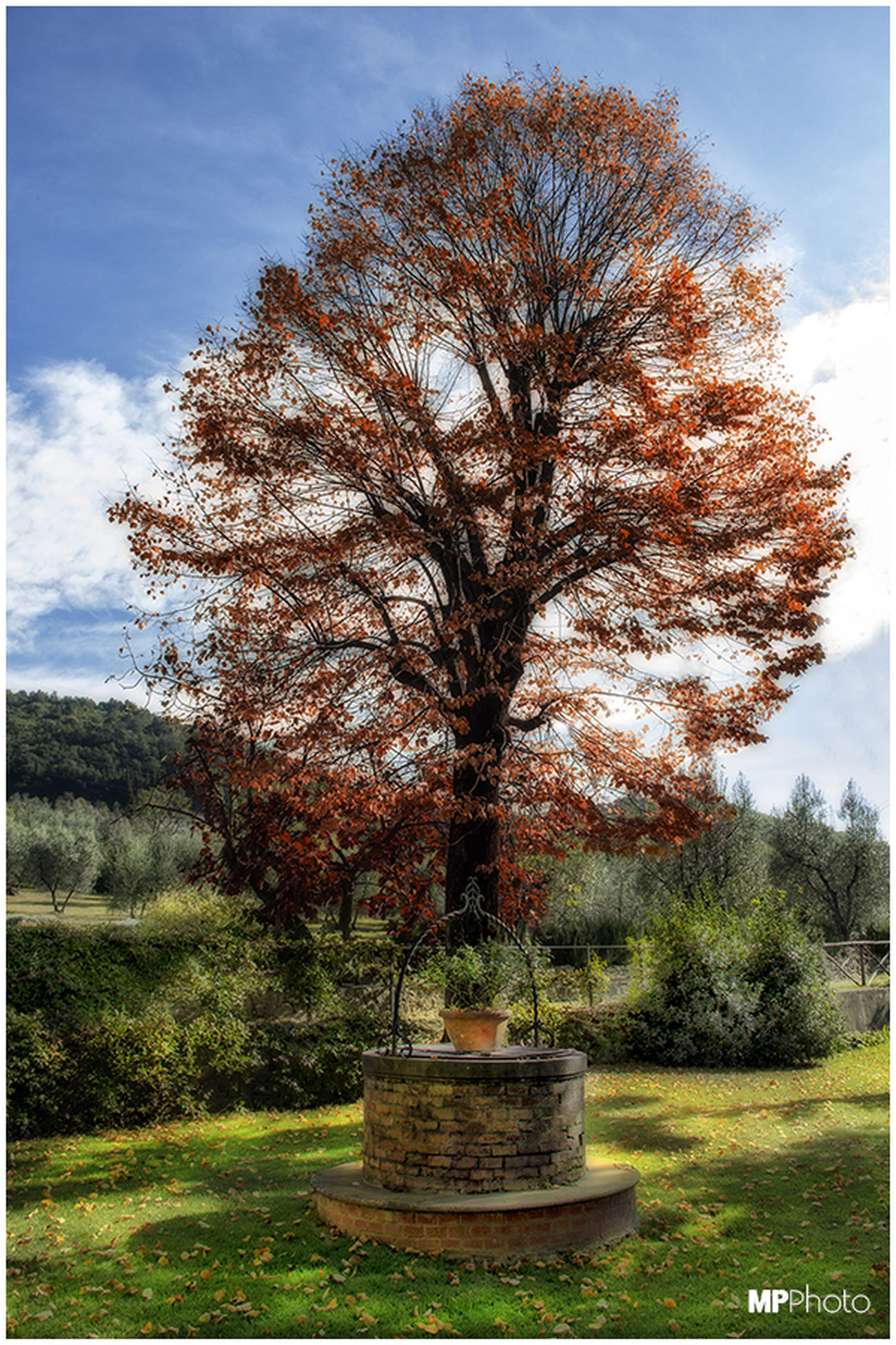 Hugging A Tree Autumn Tree_collection  Tuscany