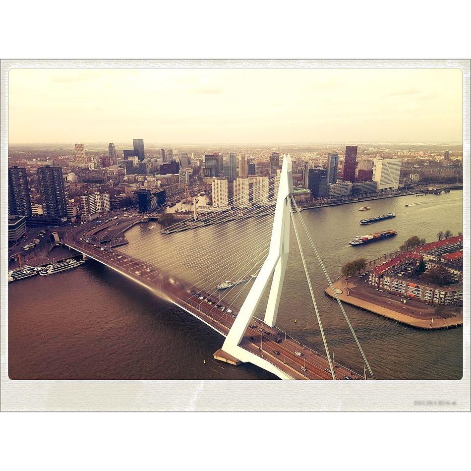 City Rotterdam Bridge Erasmusbrug Koolhaas Skyscraper Built Structure Outdoors Traffic Urban Skyline No People