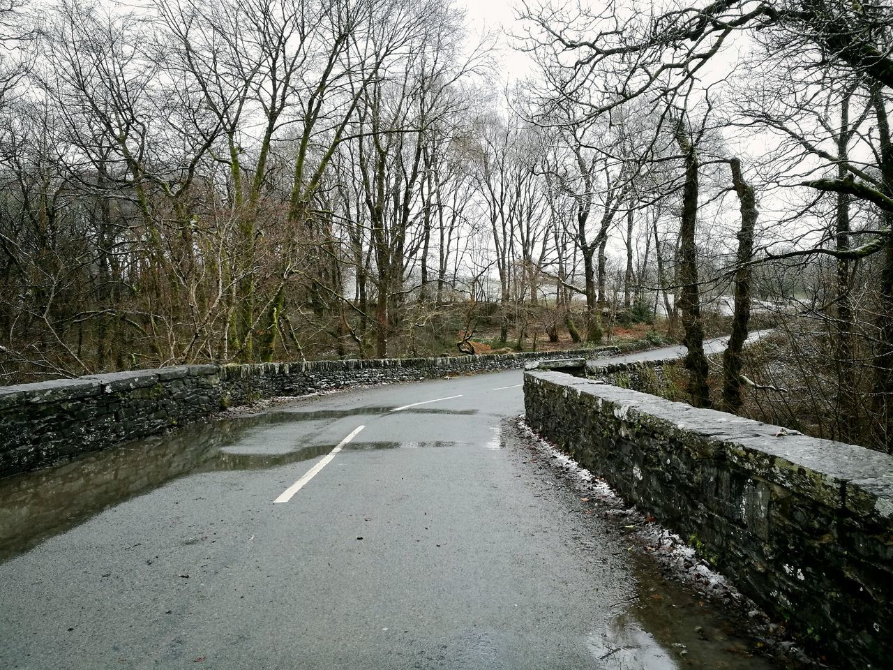 bare tree, road, tree, the way forward, nature, day, no people, outdoors, winter, water, sky