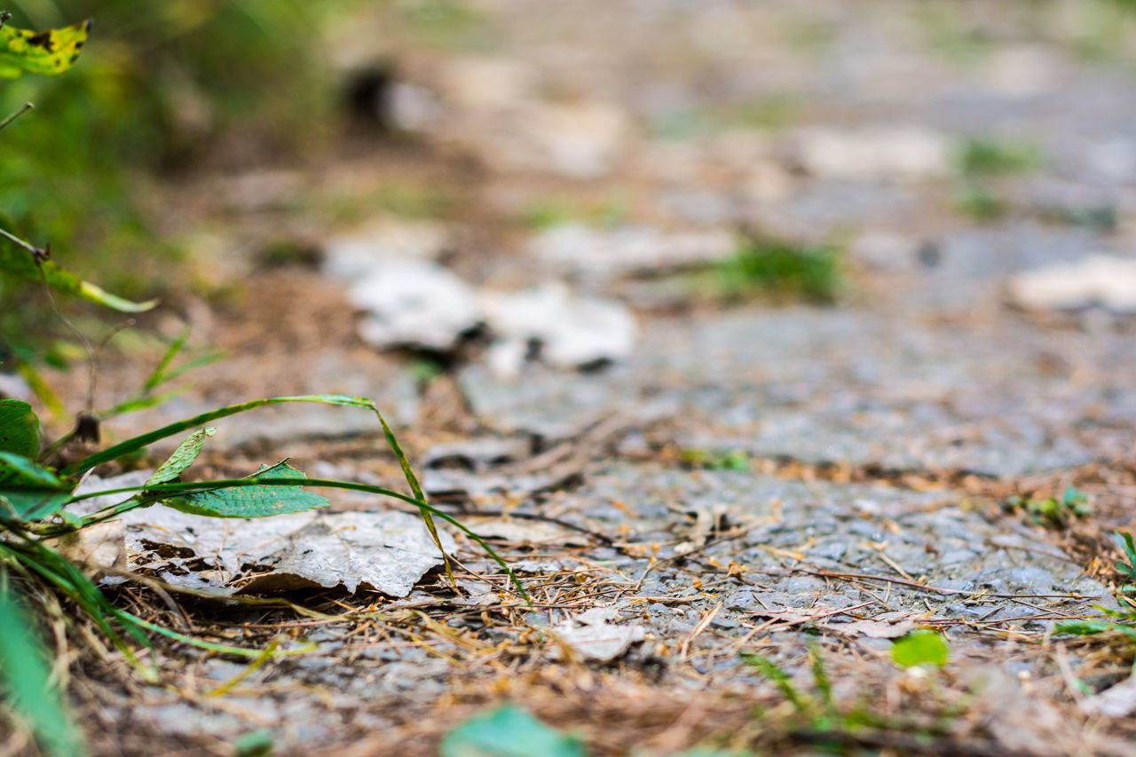 nature, selective focus, day, no people, field, outdoors, close-up, leaf, beauty in nature