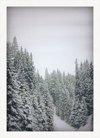 Beauty In Nature Blackandwhite Cold Temperature Day EyeEmNewHere Forest Landscape Nature No People Outdoors Polaroid Scenics Sky Snow Tranquil Scene Tranquility Tree Winter