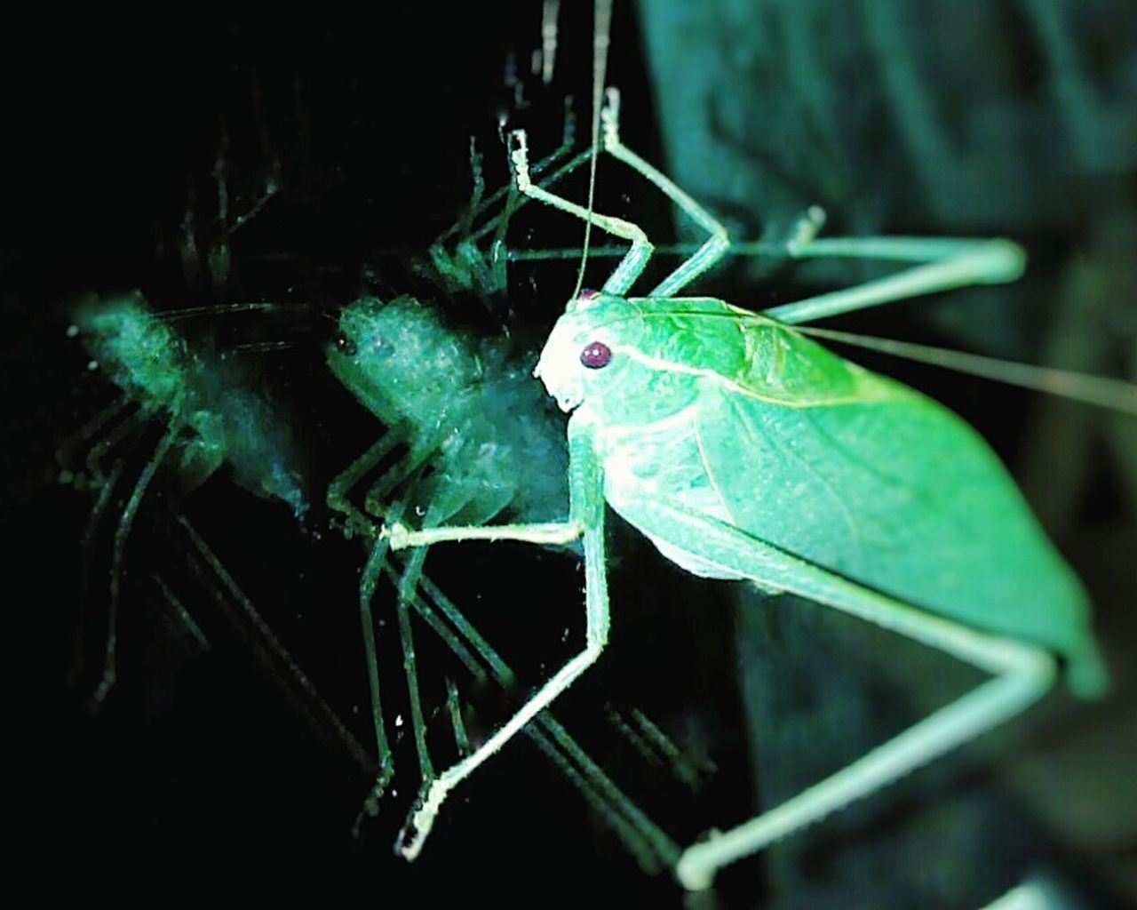 Insects  Bugs Abugslife Instabugs Reflection Reflect GREEN LIFE