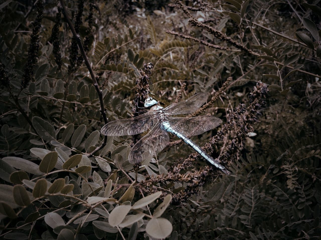 Dragonfly In Meadow