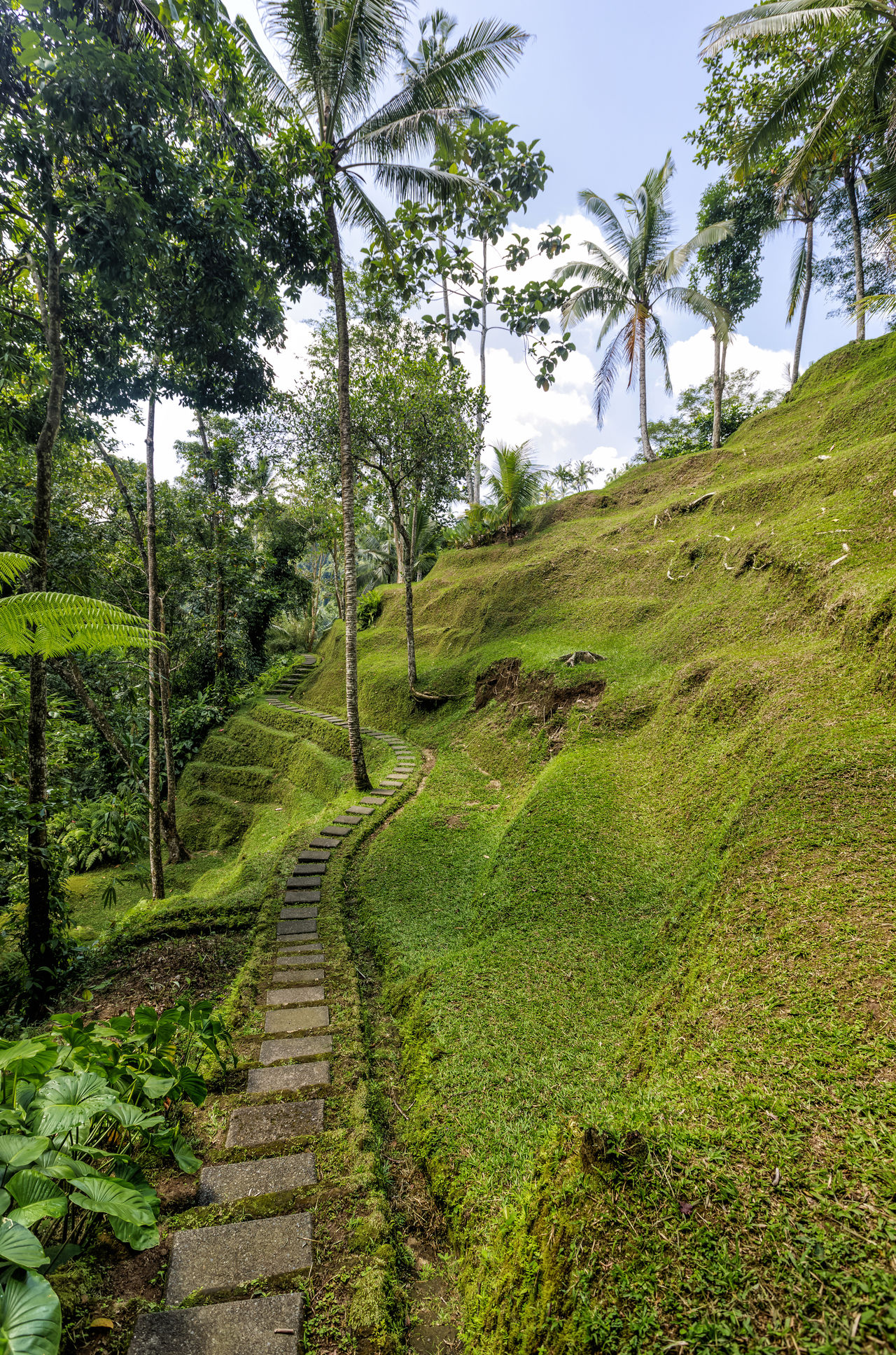 Jungle walk Bali Beauty In Nature Day Estate Footpath Grass Green Green Color INDONESIA Indonesia_photography Jungle Jungle Trekking Landscape Lush - Description Nature Nature Reserve No People Outdoors Scenics Social Issues The Way Forward Tranquility Tree Ubud Walk