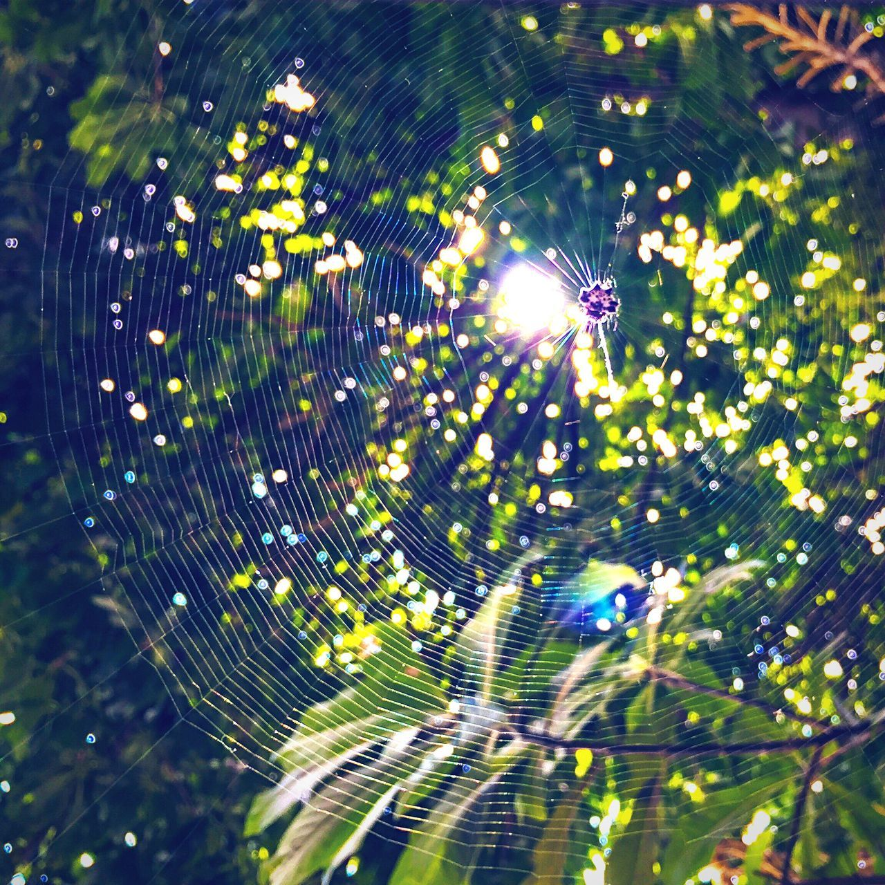 Spider net Spider Web Spider Fragility Complexity Nature Drop Concentric Beauty In Nature No People Outdoors Close-up One Animal Spinning Animal Themes Web Day Star Trail Water
