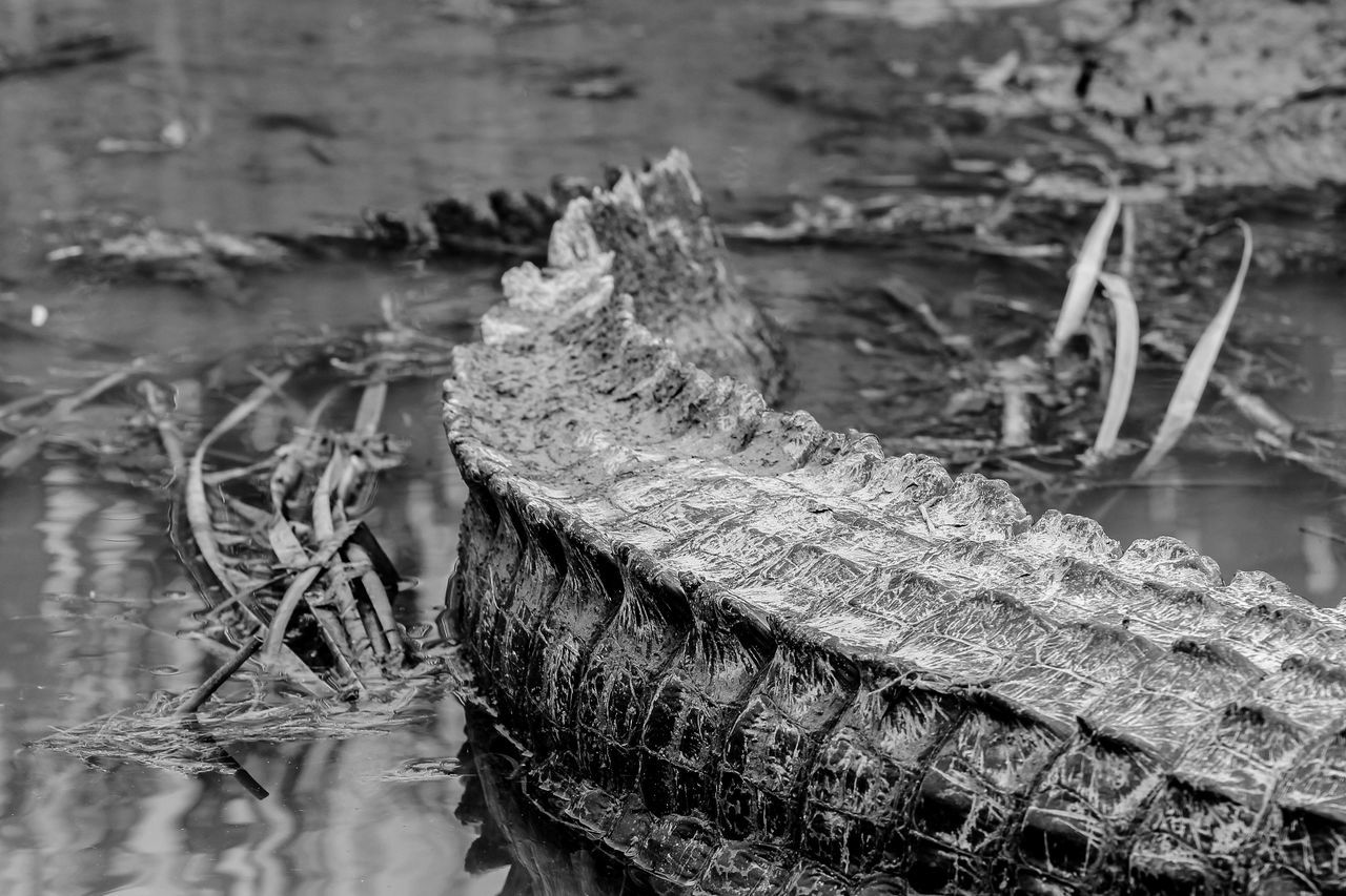 Alligators Alligator Close-up Sharp Animal Beautiful Dangerous Wild Black And White No People Eye Em Nature Lover The Great Outdoors - 2016 EyeEm Awards The Great Outdoors With Adobe Hidden Gems  Monochrome Photography Maximum Closeness Miles Away