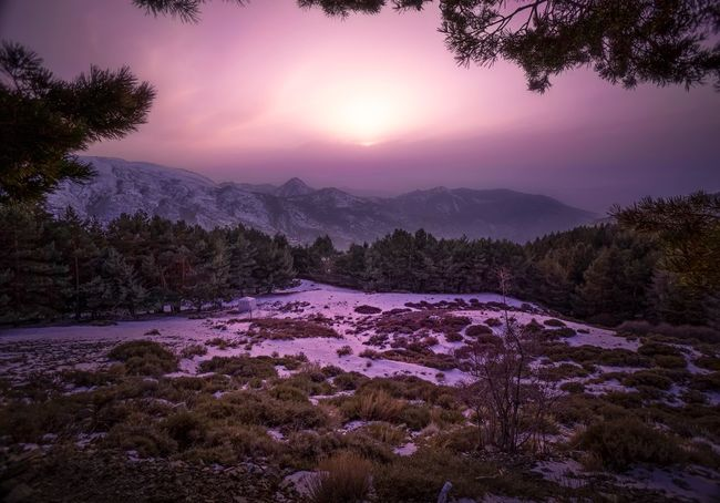 Magenta sunset Tree Purple Sunset Tranquil Scene Beauty In Nature Nature Scenics Tranquility No People Landscape Mountain Range Water Outdoors Mountain Sky Day