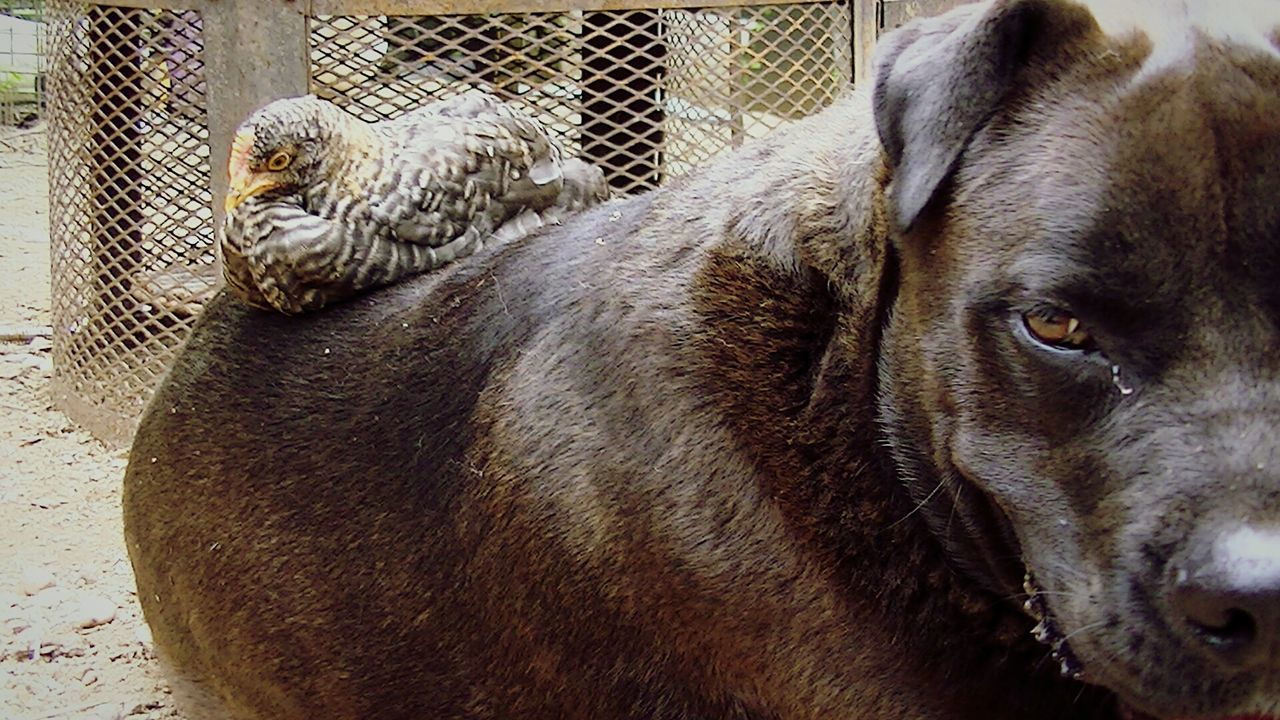 domestic animals, mammal, animal themes, no people, pets, dog, one animal, day, outdoors, close-up