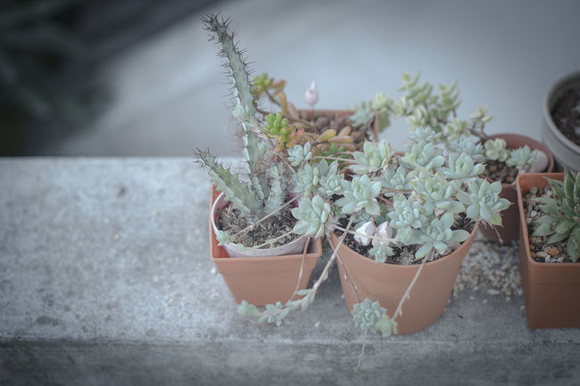 Cactus Botanical Botanical Gardens Cactus Cactus Pot Cute Cute♡ Desert Design Freshness Garden Garden Photography Green Home Life Plant Plant Plantation Pot Retro Style Roof Roof Garden Slow Life Slow Life 😊 Style Tree