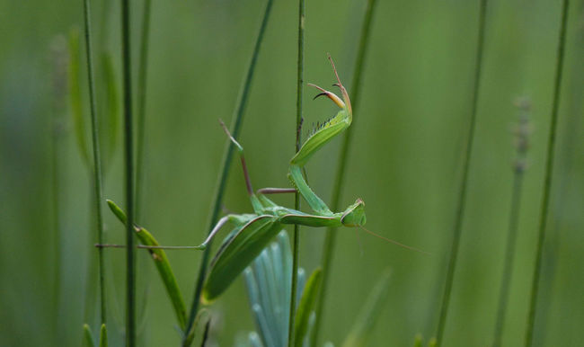 Animal Themes Animals In The Wild Green Color Growth Insect Mimetism No People One Animal Tranquility Wildlife