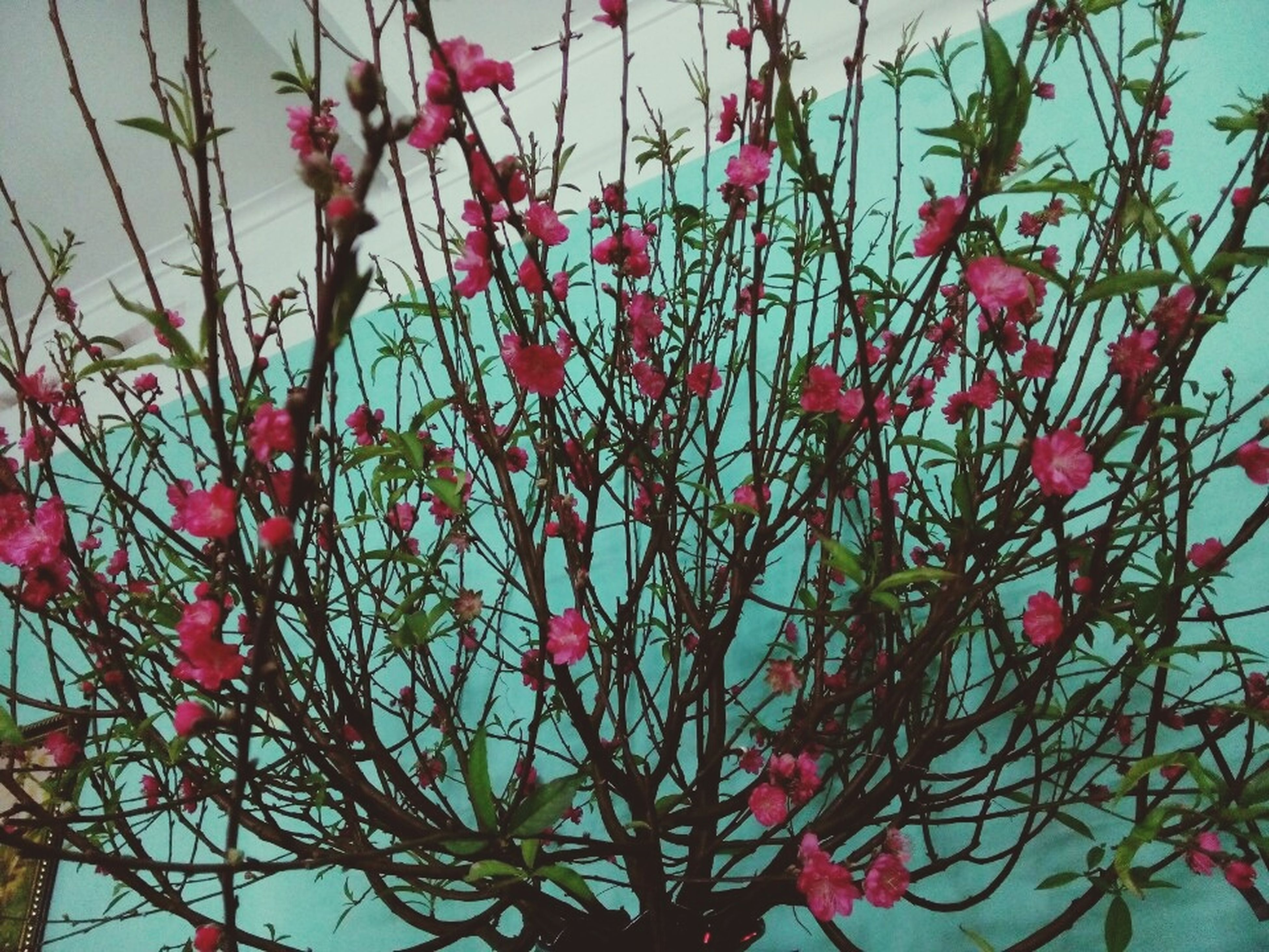 flower, freshness, low angle view, branch, growth, red, tree, pink color, nature, beauty in nature, fragility, clear sky, sky, plant, blossom, day, leaf, blooming, outdoors, no people