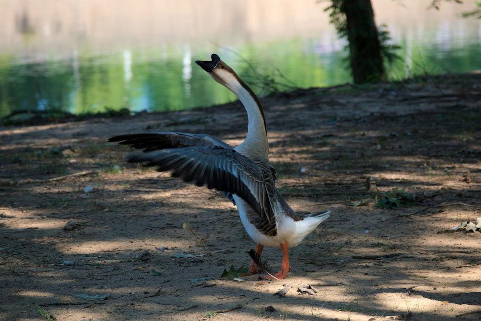 Bird Photography Birds Birds_collection Day Nature Outdoors