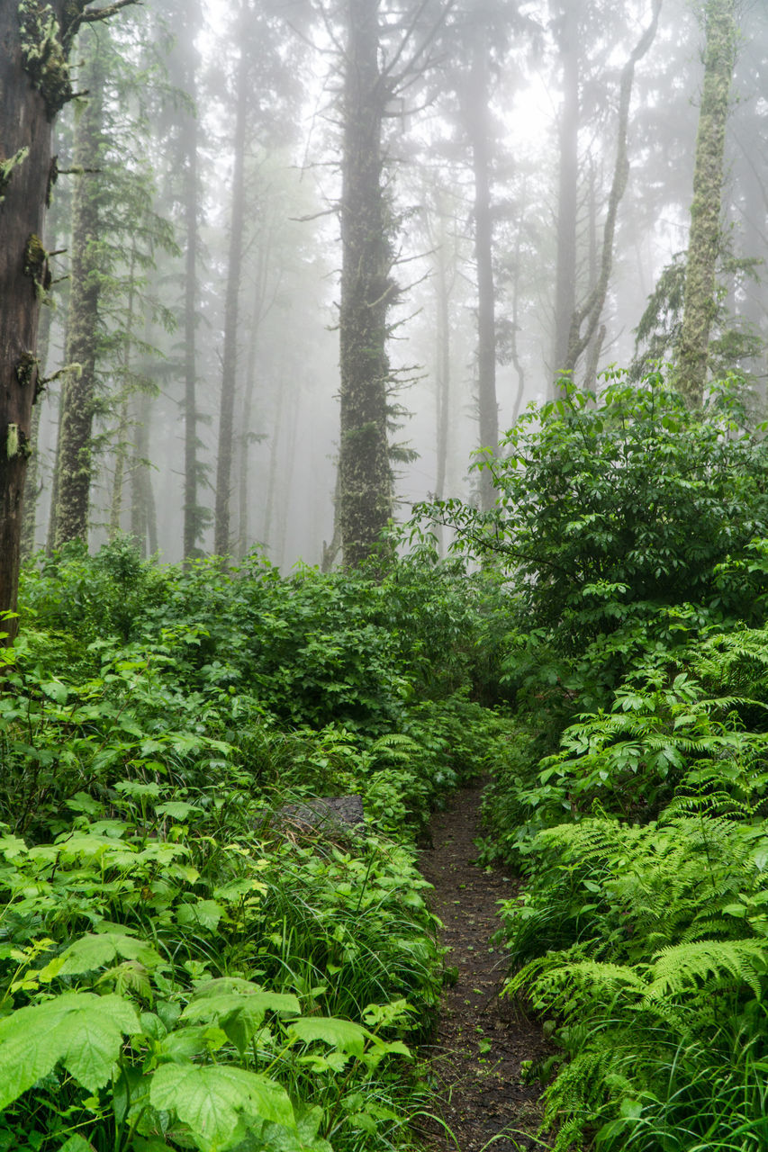nature, tree, growth, forest, plant, landscape, day, tree trunk, tranquility, no people, beauty in nature, mist, tranquil scene, outdoors, fog, scenics, hazy