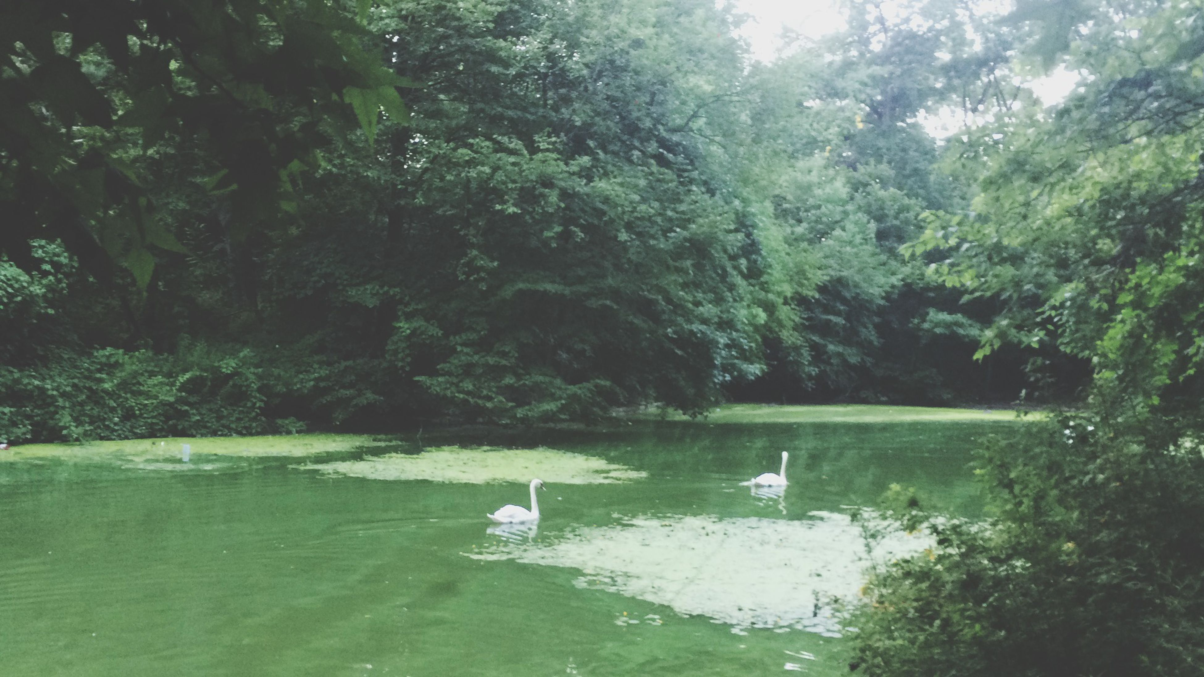 water, tree, tranquility, bird, nature, green color, lake, tranquil scene, animal themes, beauty in nature, animals in the wild, waterfront, wildlife, scenics, growth, one animal, day, river, nautical vessel, outdoors
