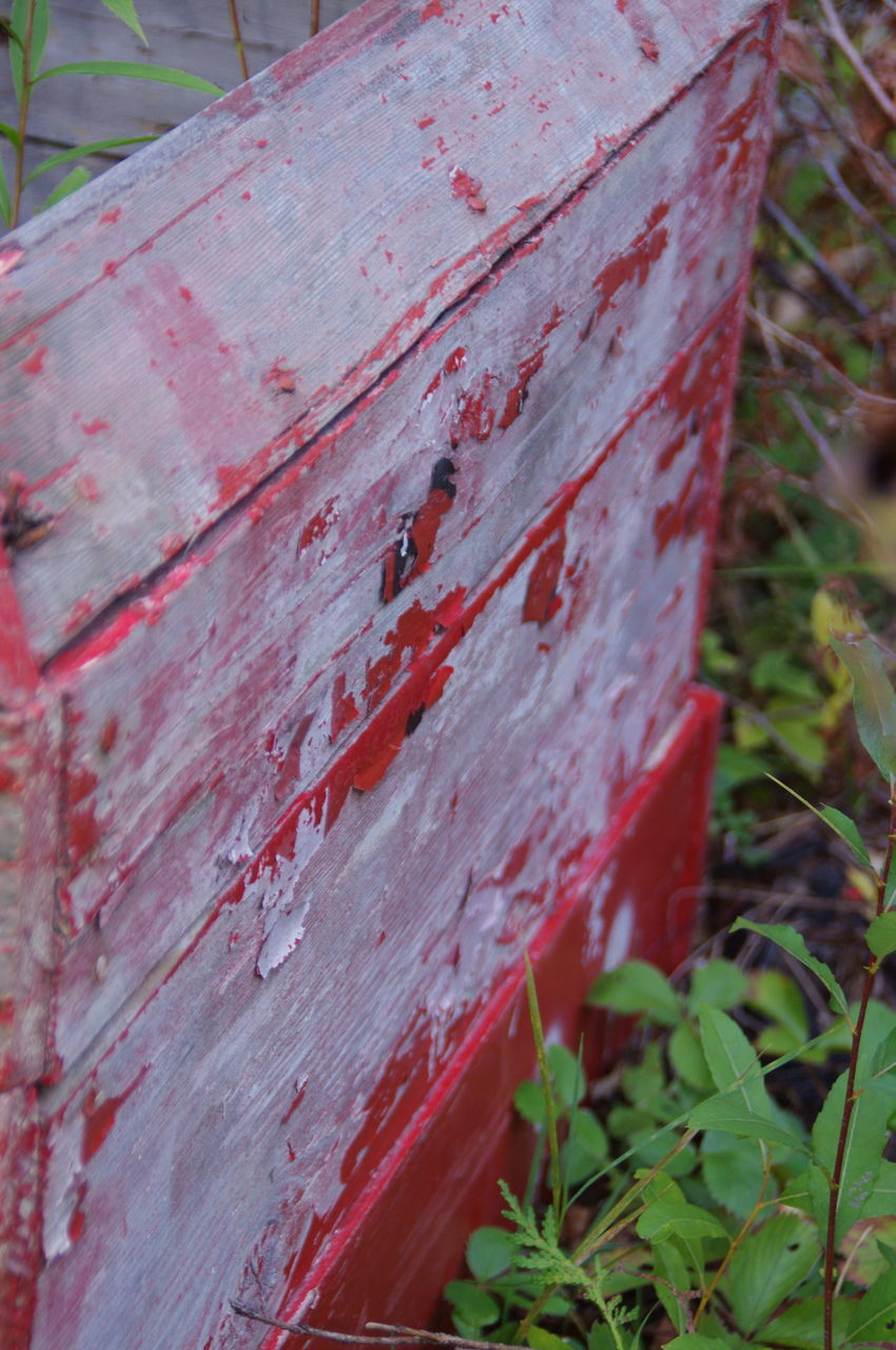 red, day, no people, outdoors, close-up, wood - material, nature, growth