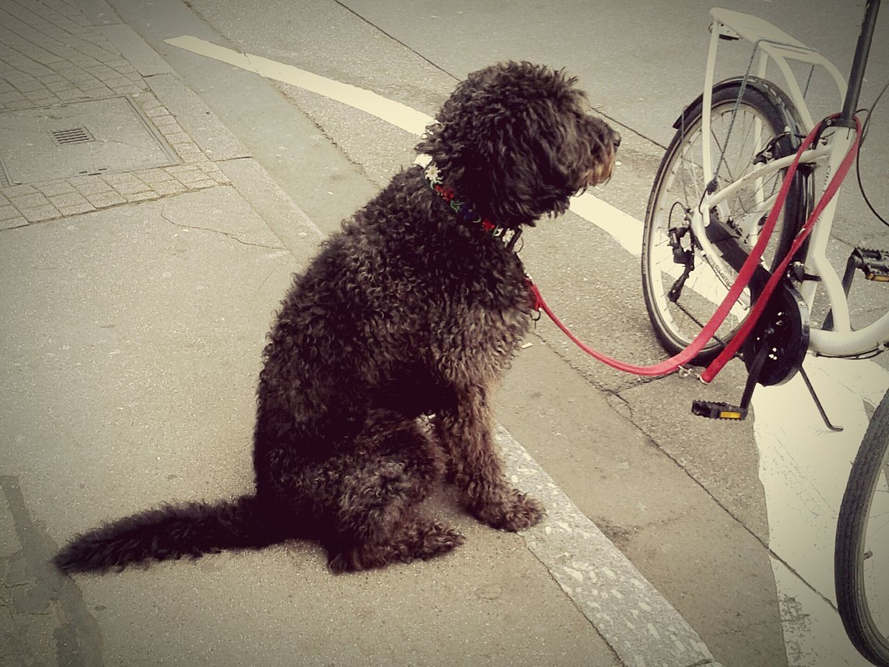 Animal Themes Domestic Animals Mammal Outdoors Lifestyles Adapted To The City City Life High Angle View One Animal No People Pets Day Dog❤ Dog Dogs Dog Love Dogslife Dogs Of EyeEm Doglover