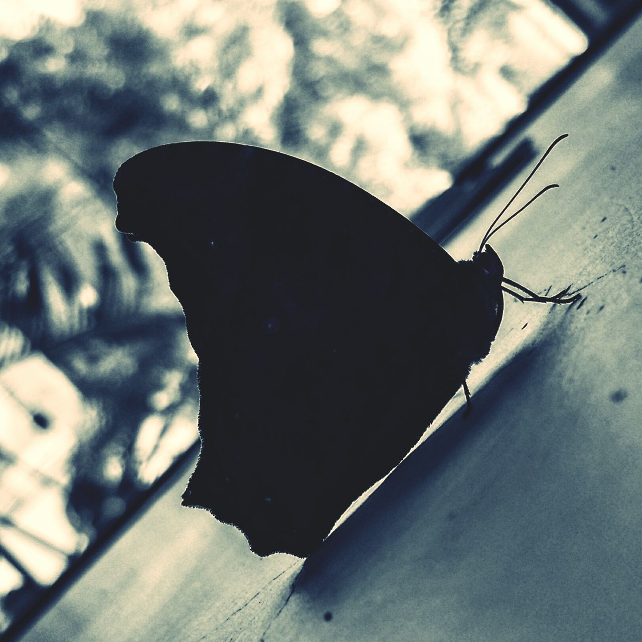 insect, one animal, animal themes, close-up, animals in the wild, no people, day, outdoors, butterfly - insect, nature, fragility