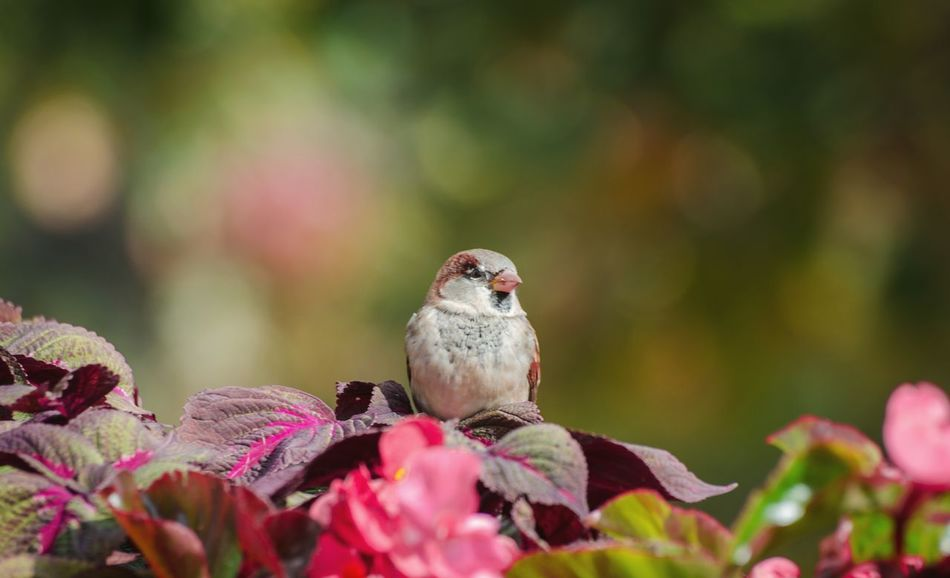 Angry bird Nature Living Organism Flower Perching Animal Beauty In Nature Full Length Red Sunlight Sunny Songbird  Animal Wildlife Bird Animals In The Wild Outdoor Pursuit One Animal Sunbeam Bokeh Springtime Sitting Motion Bokeh Photography Bokehlicious Nature_collection Green