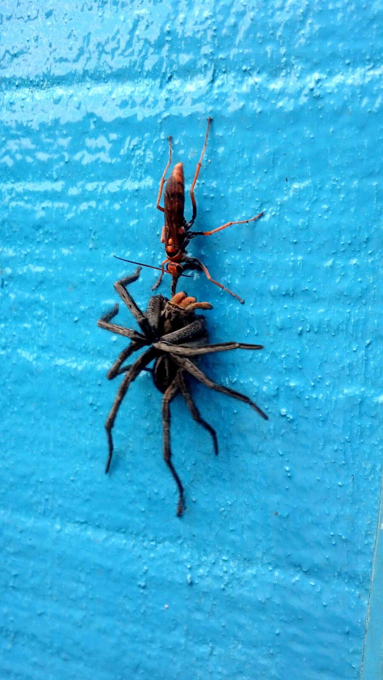Como a natureza é desconhecida Spider First Eyeem Photo