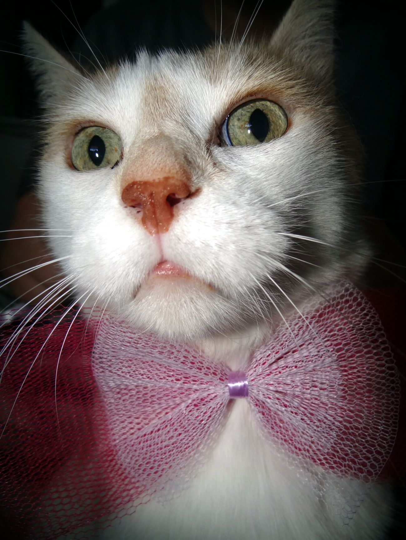 Bonsoir ! 😺 Good evening ! Easter Ready Cat Animals Animal Funny Mister Class Cute Cute Pets Cats Cat♡ Kitty Cat Lovers House Traveling Evening Hello World Lol :) Gentlemen Taking Photos France Chat Cheese! Enjoying Life