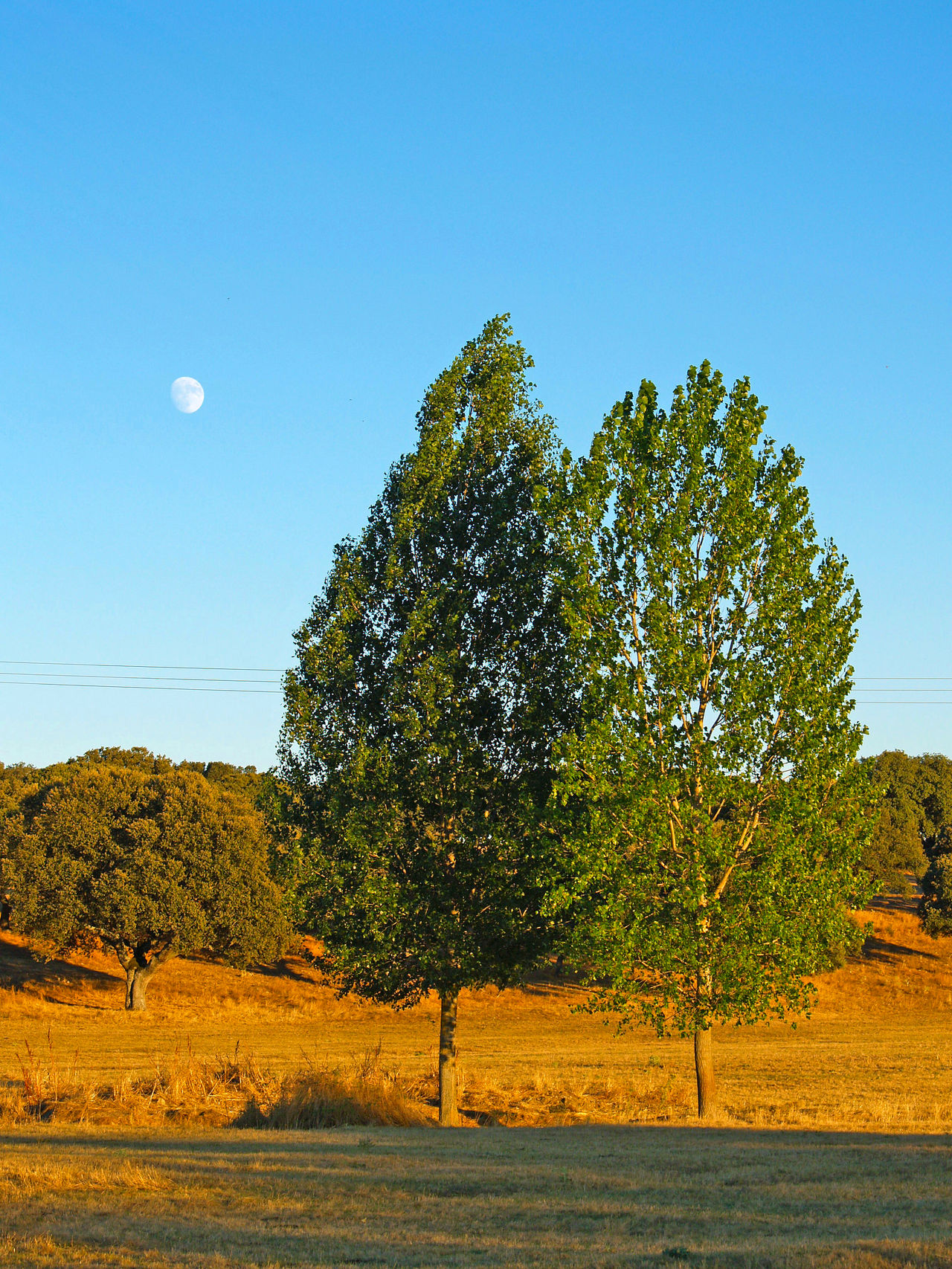 Beauty In Nature Blue Day Dehesa Environment Forest Growth Landscape Moon Moon Moonlight Nature Nature No People Outdoors Pasture Pasture, Paddock, Grassland, Pastureland Populus Populus Nigra Scenics Sky Tranquil Scene Tranquility Tree