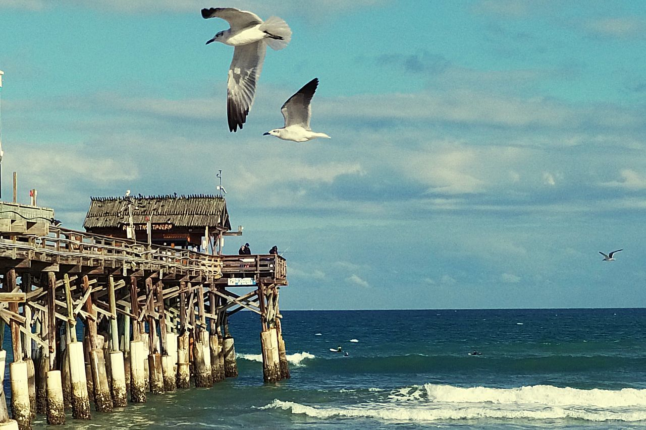sea, bird, flying, animals in the wild, horizon over water, seagull, spread wings, animal themes, nature, water, sky, day, animal wildlife, mid-air, outdoors, beauty in nature, cloud - sky, beach, sea bird, no people, scenics