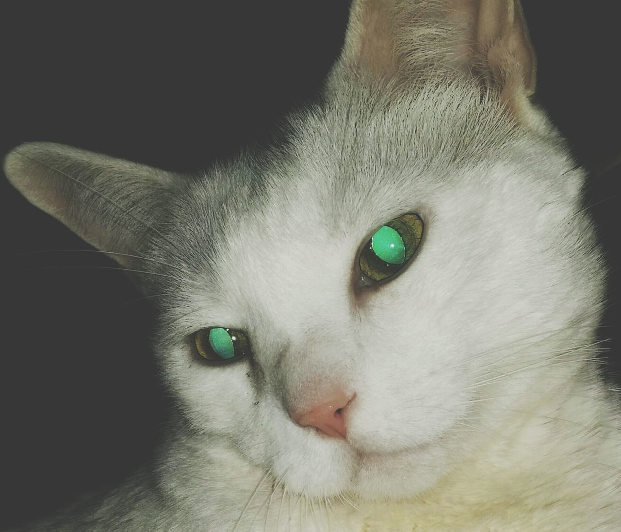 Mycatisthebest Therapypet Lovedefined Angel In Disguise Mypal EyeEm Pets Popular Photos Cat Lovers Whitecat