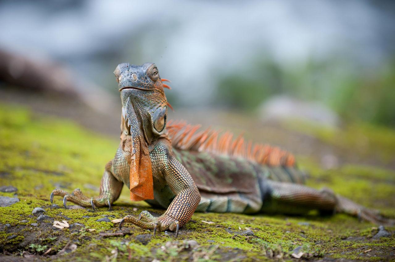 Beautiful stock photos of tropical, , Animal, Calm, Environment