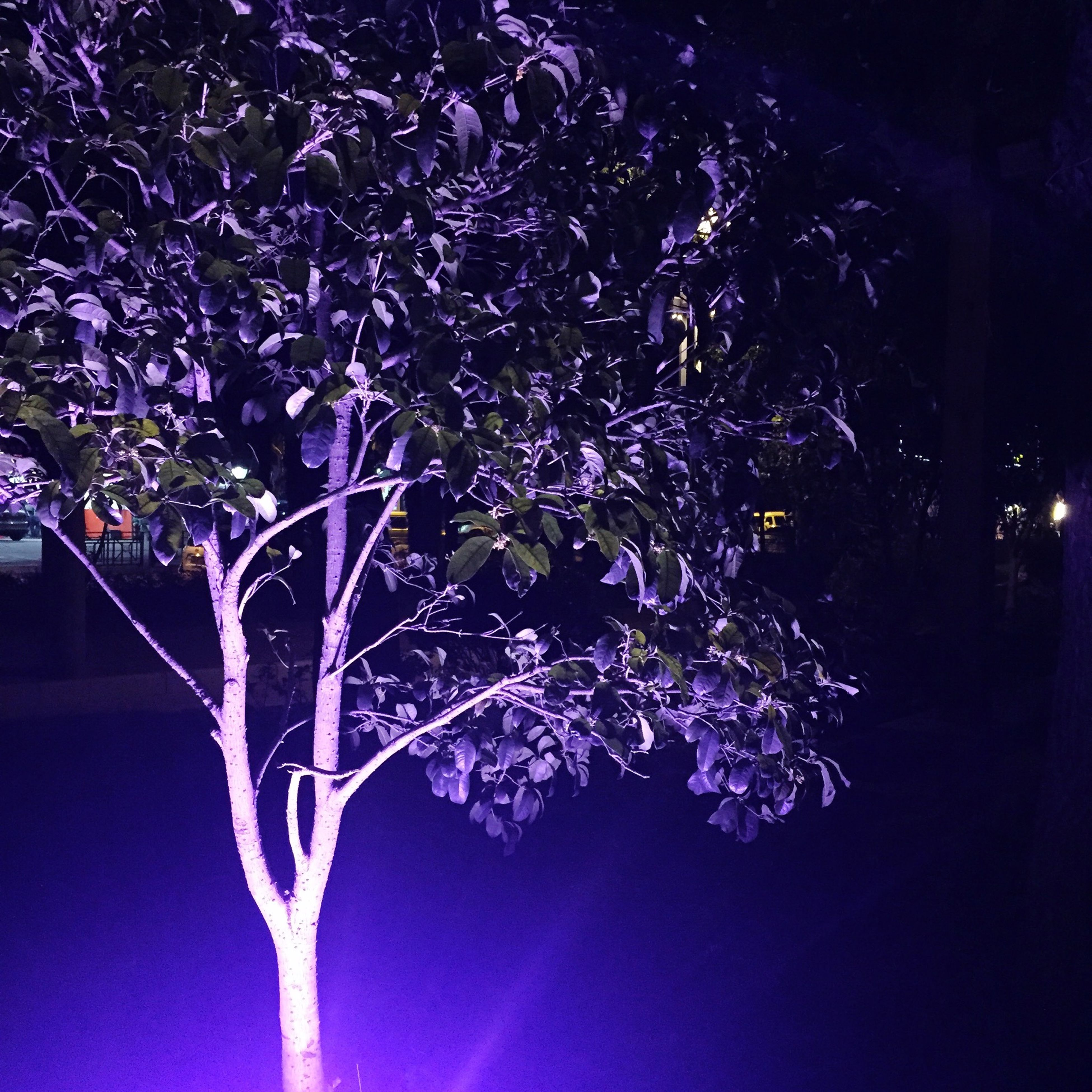 night, tree, branch, growth, illuminated, low angle view, nature, beauty in nature, flower, lighting equipment, no people, outdoors, blue, purple, light - natural phenomenon, park - man made space, tranquility, dark, plant, sky