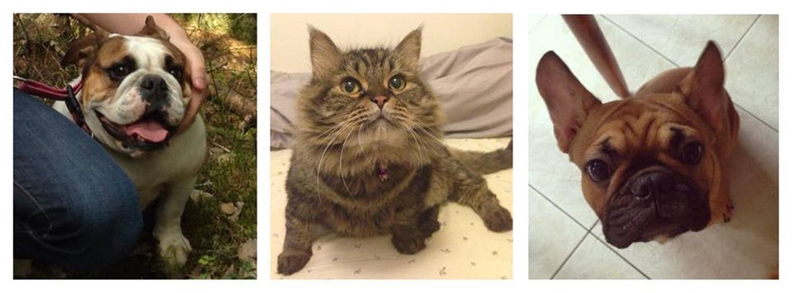 My 3 children My Pet Cute Pets Cute♡ My Cute Cat <3 Mydog♡ My French Bulldog <3
