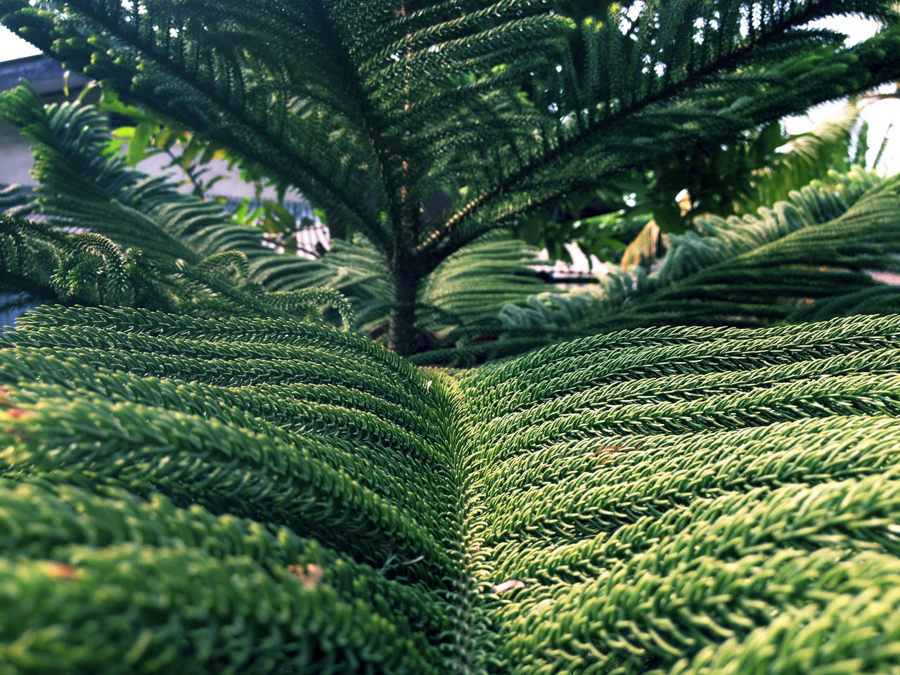 green color, growth, nature, leaf, beauty in nature, plant, fern, no people, day, close-up, freshness, outdoors, fragility
