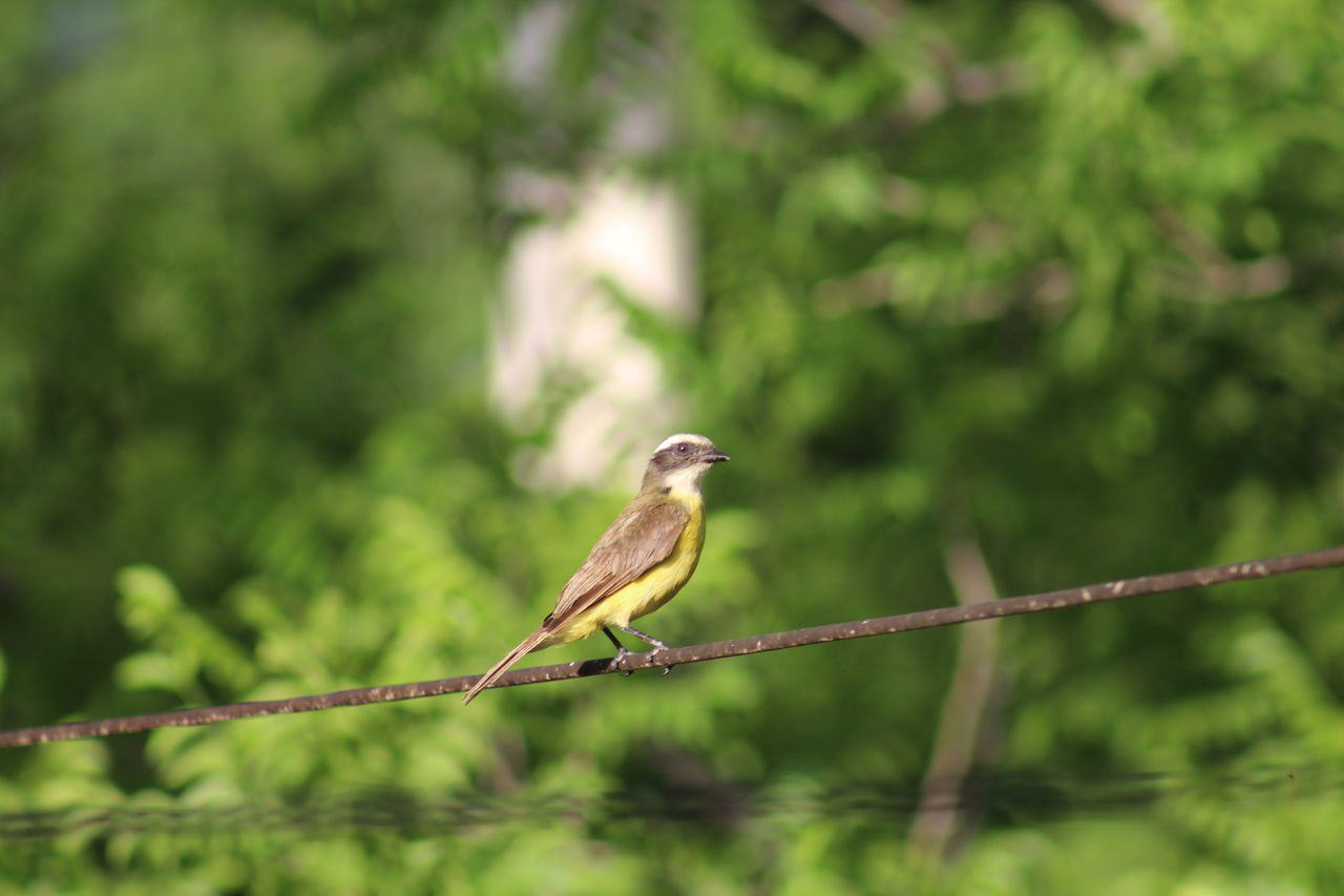 Bird Perching On Table Against Trees