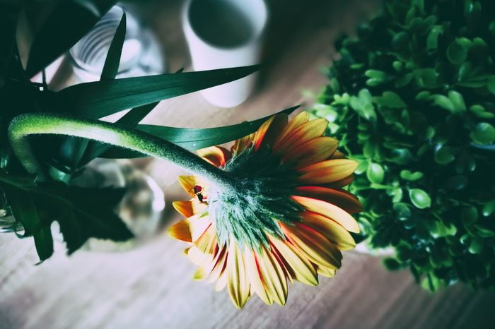 Flower Flowerporn Flowerbutt Growth Fragility Plant Freshness Close-up Flower Head Petal Arrangement Table Beauty In Nature Nature EyeEm Nature Lover EyeEm Masterclass Eye4photography  Macro Aster From Above  Kitchen Table Lifestyles Blossom HuaweiP9