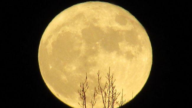 Full Yellow Moon 2am & Sleepless Cadillac Michigan Moon_lovers