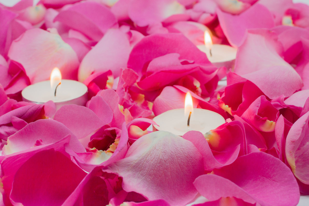 Candles and Rose Petals Beauty In Nature Blurry Background Calm Candles Close-up Flower Fragility Freshness Full Frame Horizontal Lit Nature No People Petal Petals Pink Color Plant Relaxation Rose Petals Shallow Depth Of Field Tea Lights Tranquility