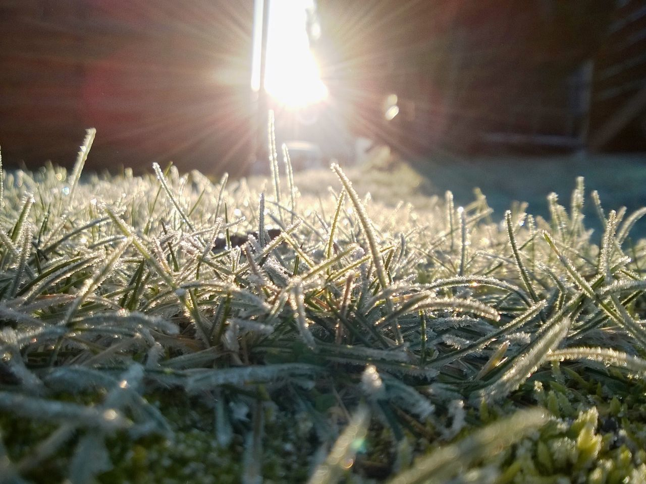 Grass Green Frost Frosty Frosty Morning Taking Photos No People Sun Sunrise Sunlight 2016 Lumia920 Windows 10 Windows 10 Mobile Postprocessing Enlight Enlight App Outdoors Sunset #sun #clouds #skylovers #sky #nature #beautifulinnature #naturalbeauty #photography #landscape Nature Nature Photography Frosty Mornings Frosty Frozen
