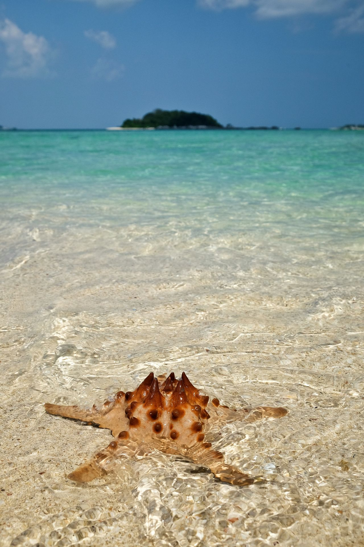 Beautiful stock photos of starfish, Animal Themes, Beauty In Nature, Day, High Angle View