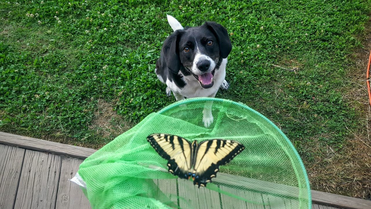 Beautiful stock photos of schmetterling, Animal Themes, Animal Wildlife, Animals In Captivity, Butterfly - Insect