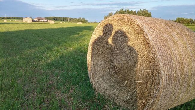 Summer Views Love Without Boundaries In The Fields