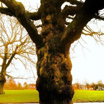 Kingsheathpark Trees Treehugging Winter2014 Winterwalks Brum
