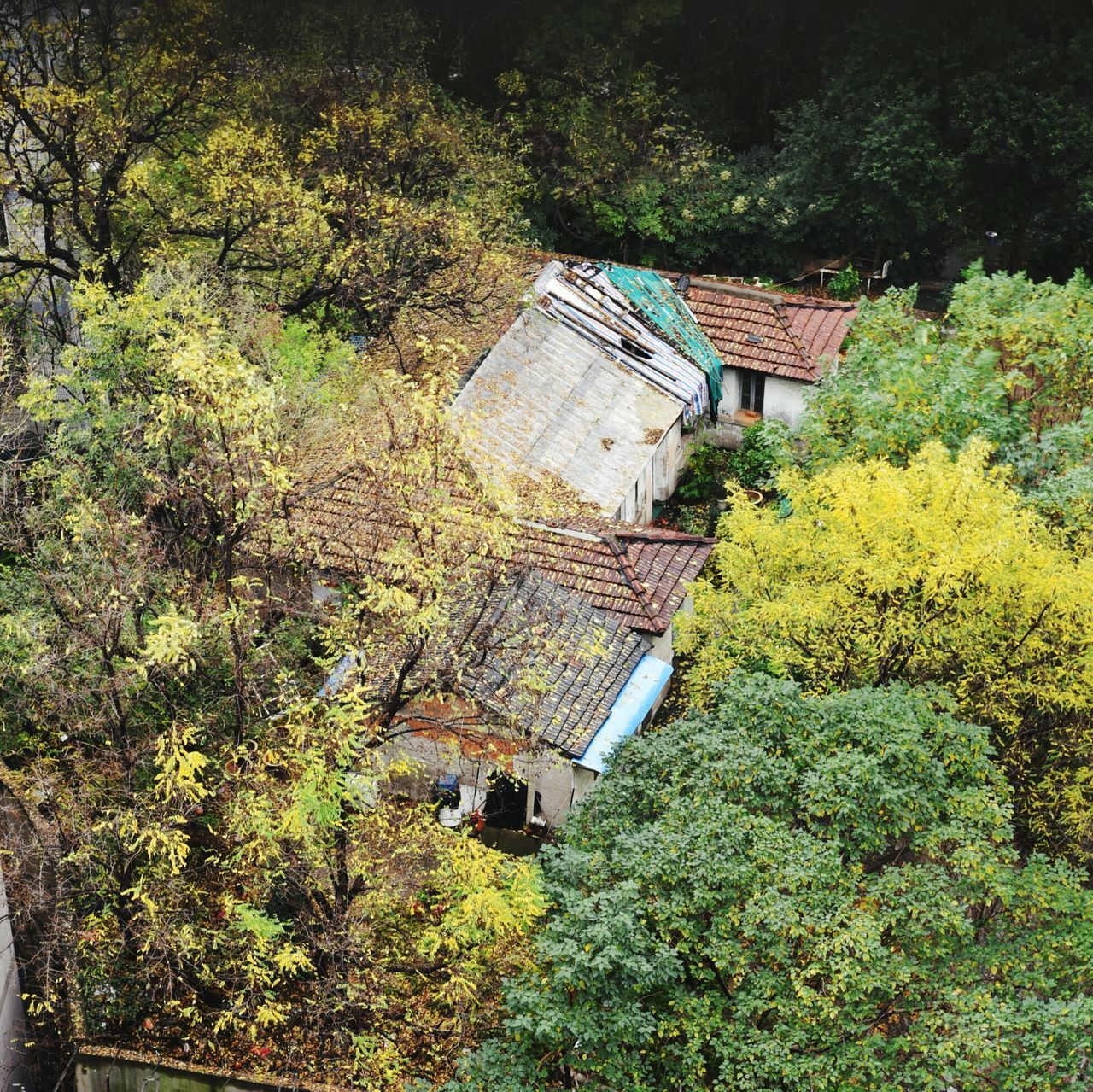 tree, built structure, architecture, no people, house, day, nature, building exterior, high angle view, outdoors, beauty in nature, autumn, plant, growth